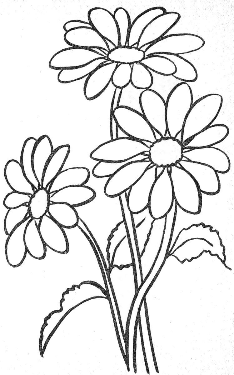 Tranh tô màu hoa cúc cho bé