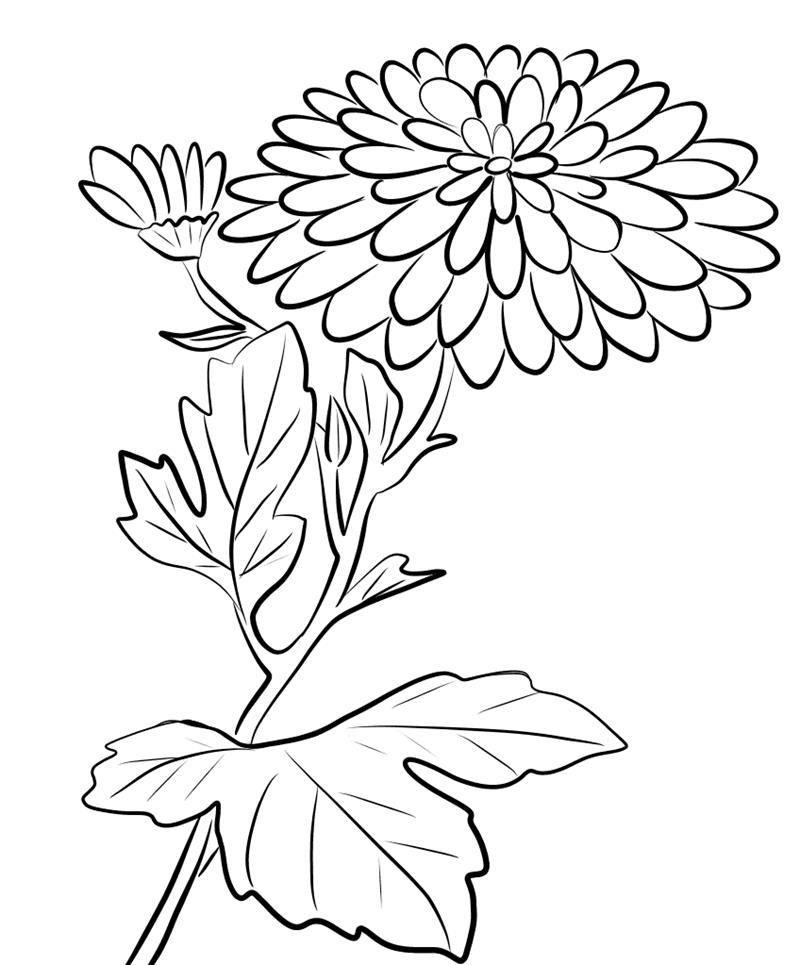 Tranh tô màu hoa cúc cực đẹp