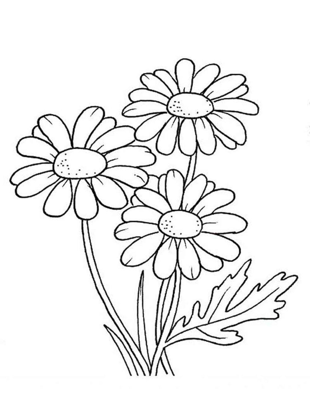 Tranh tô màu hoa cúc đẹp, đơn giản
