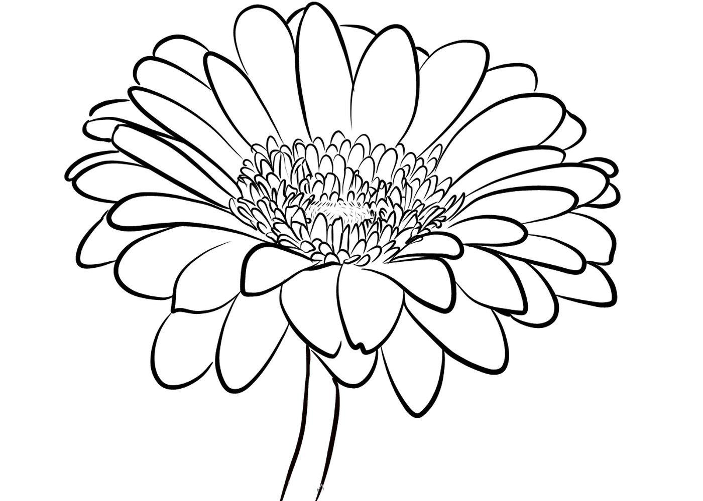 Tranh tô màu hoa cúc đẹp, hấp dẫn nhất