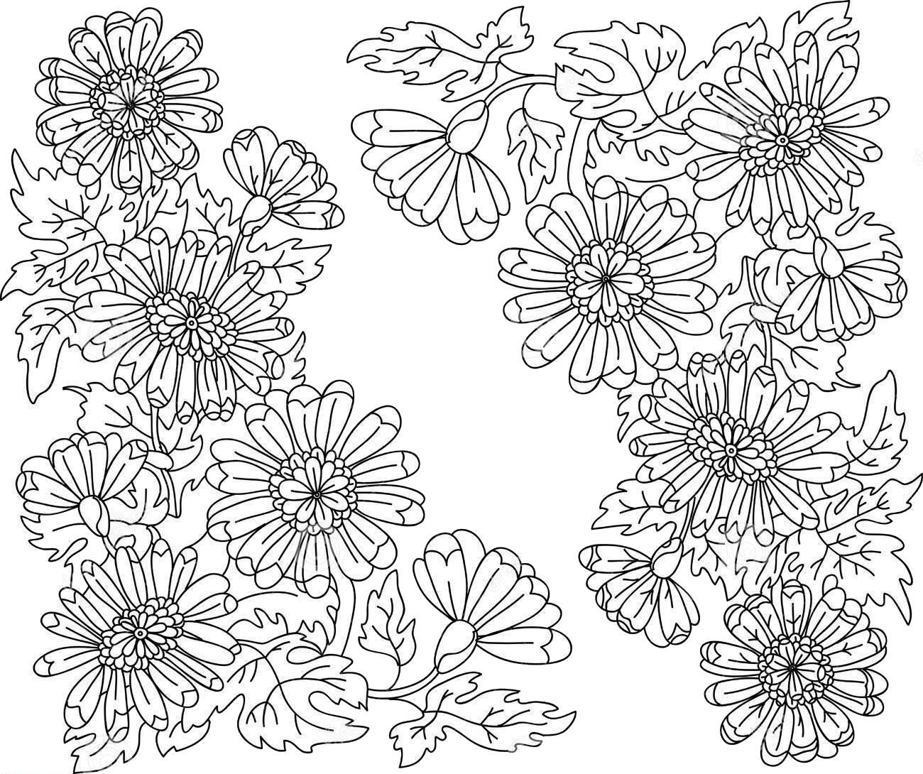 Tranh tô màu hoa cúc đẹp và ý nghĩa