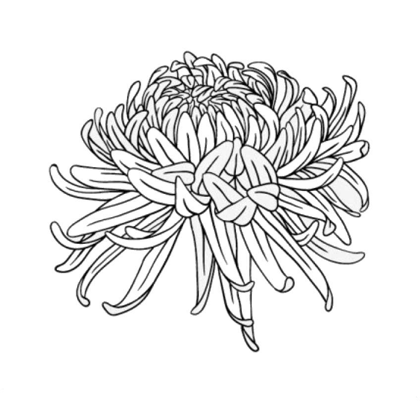 Tranh tô màu hoa cúc đẹp