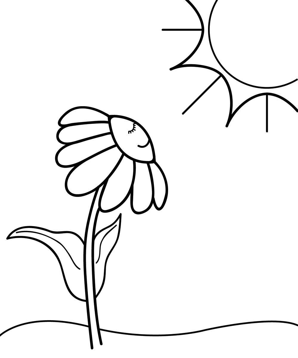 Tranh tô màu hoa cúc và mặt trời