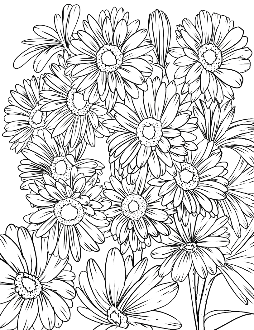 Tranh tô màu những bông hoa cúc đẹp nhất
