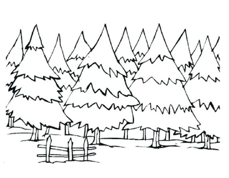 Tranh tô màu rừng thông