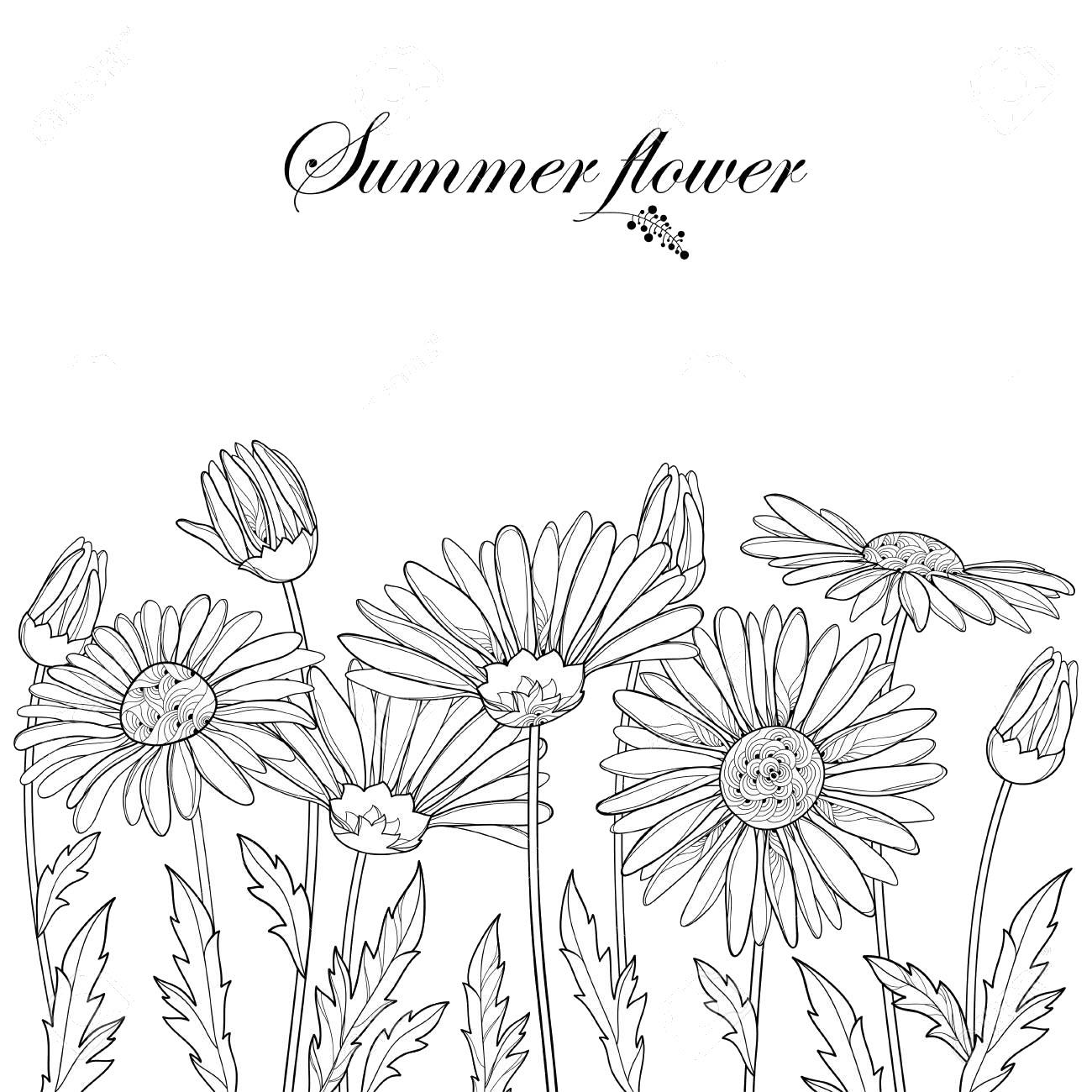 Tranh tô màu vườn hoa cúc mùa hừ