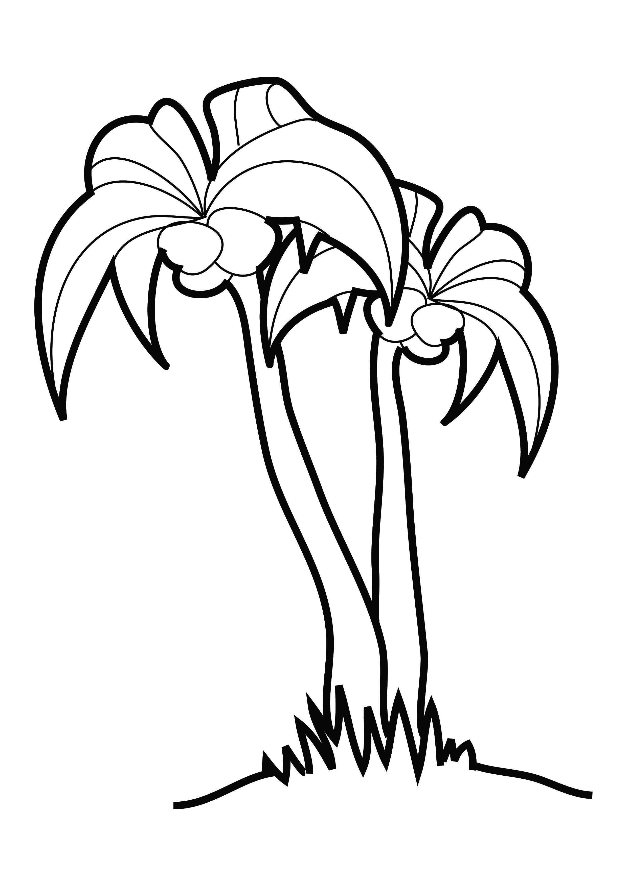 Hình tô màu cây dừa đẹp, đơn giản
