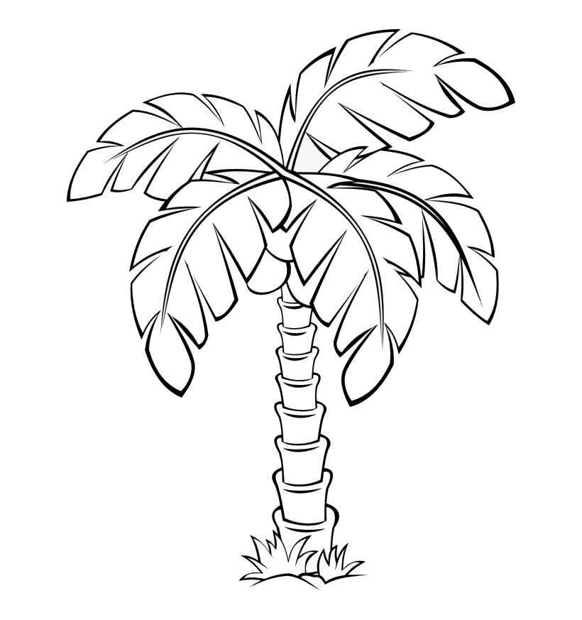 Tranh cây dừa chưa tô màu