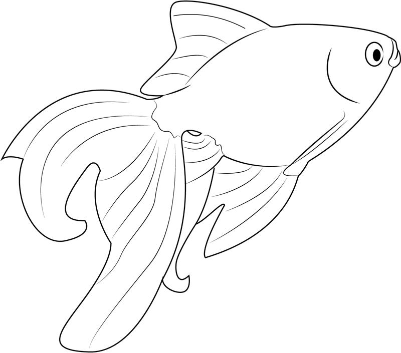 Tranh tô màu cá vàng cho bé