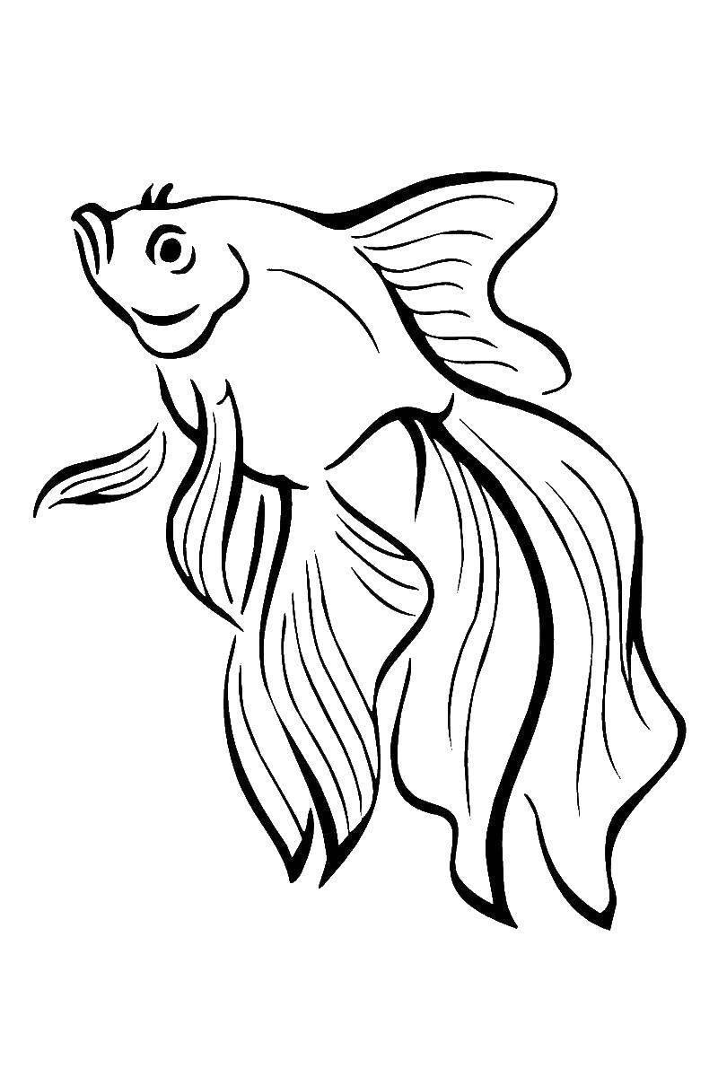 Tranh tô màu cá vàng đang bơi