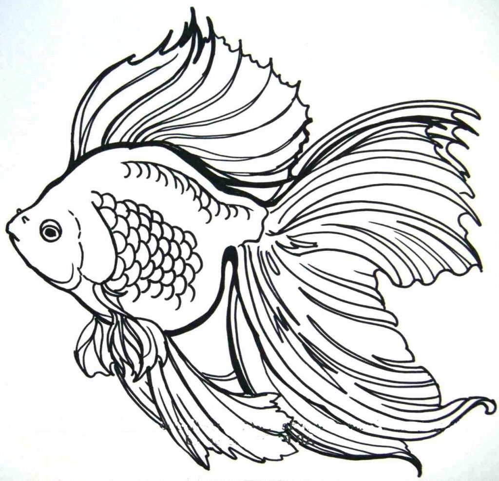 Tranh tô màu cá vàng đẹp lộng lẫy nhất