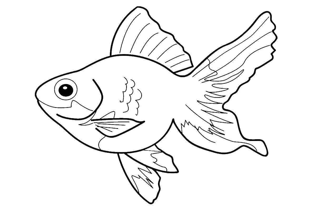 Tranh tô màu cá vàng đẹp