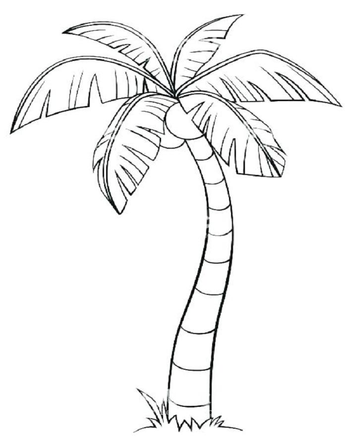 Tranh tô màu cây dừa cho bé