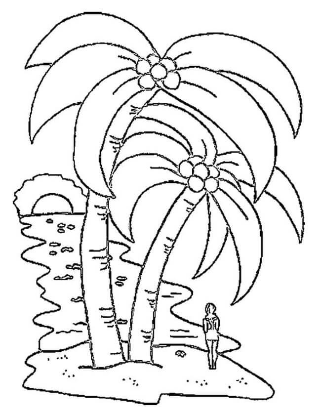 Tranh tô màu hình cây dừa