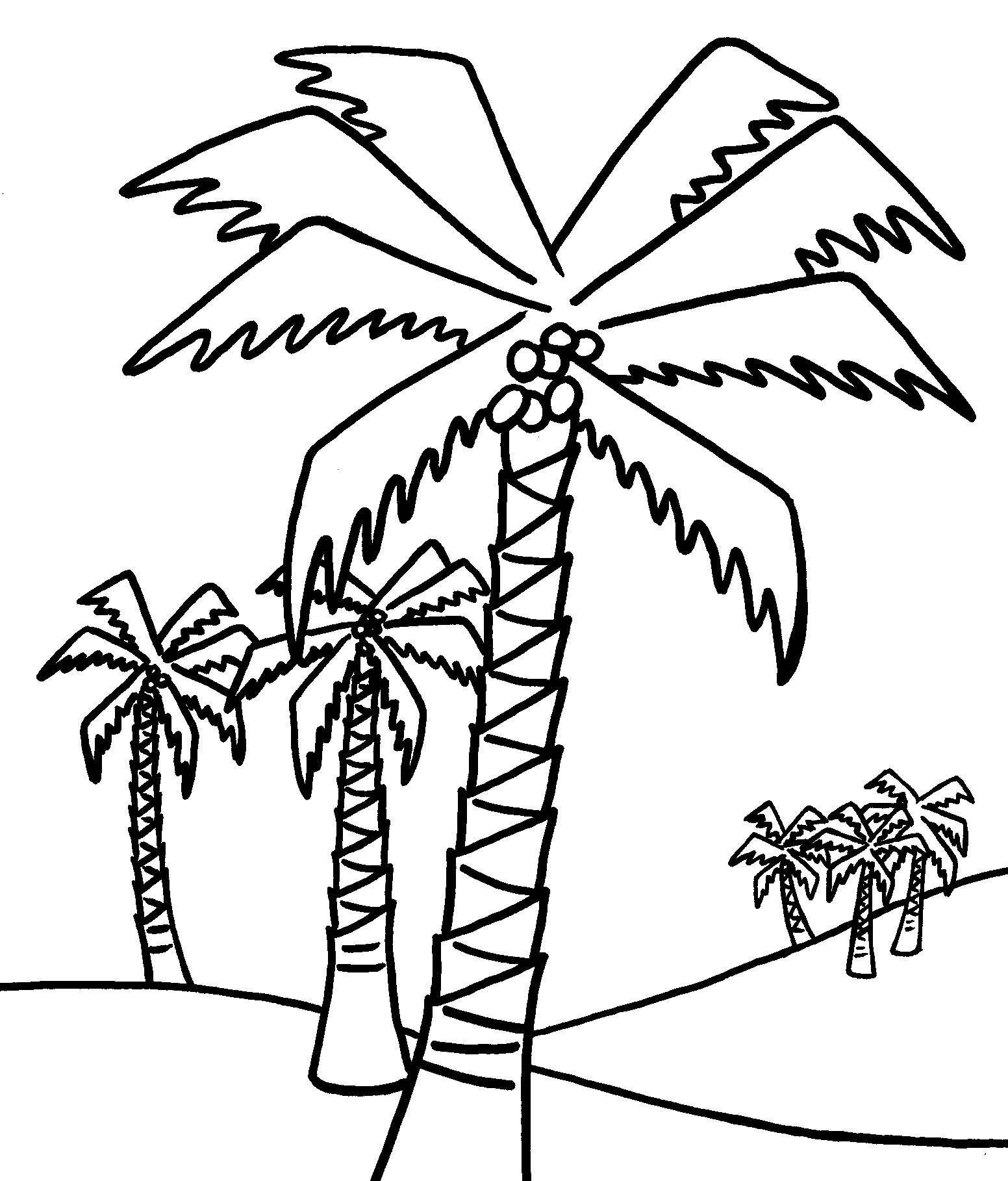 Tranh tô màu những cây dừa