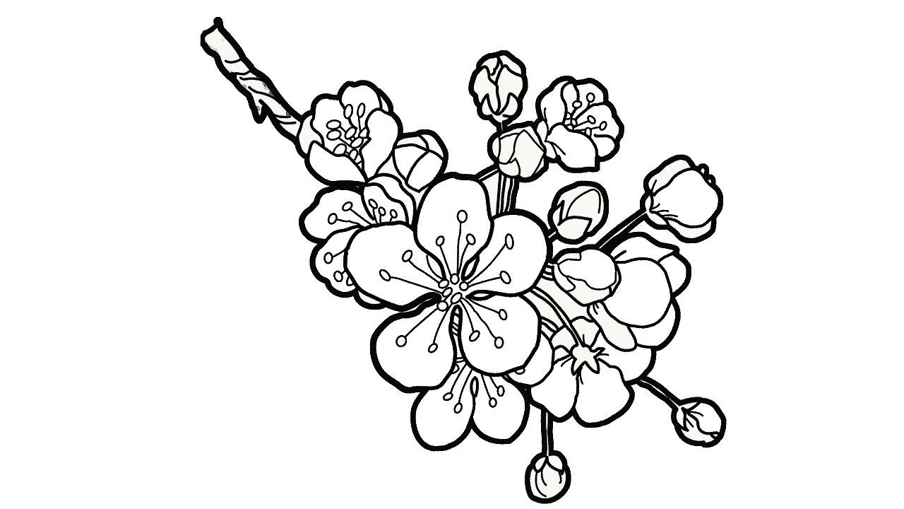 Mẫu tranh tô màu hoa đào đơn giản, đẹp