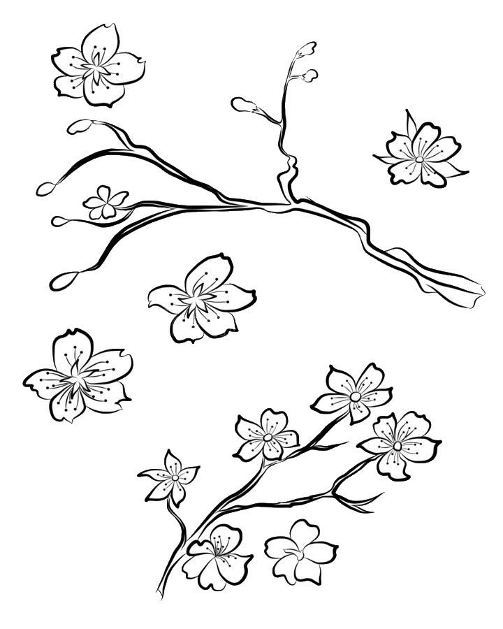 Mẫu tranh tô màu hoa đào, hoa mai đẹp