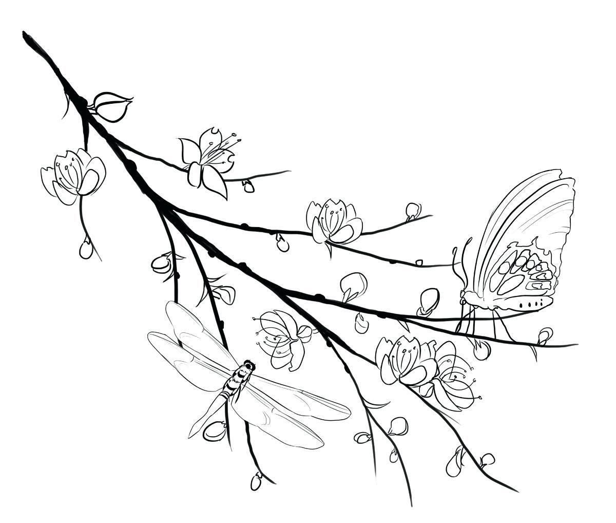 Tranh tô màu cành hoa mai đẹp nhất