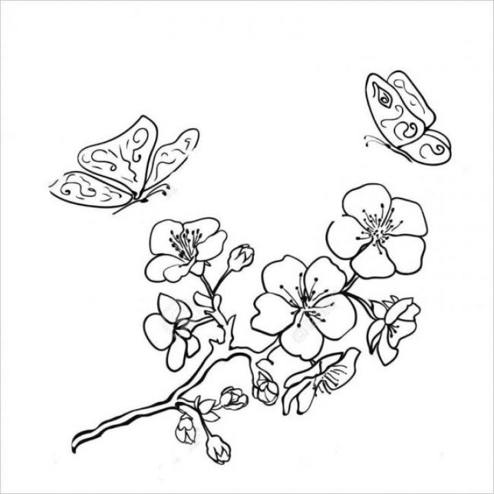 Tranh tô màu cành hoa mai và con bướm