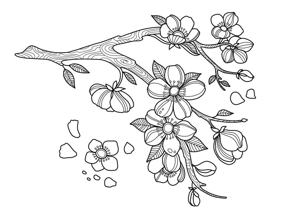 Tranh tô màu cành hoa mai