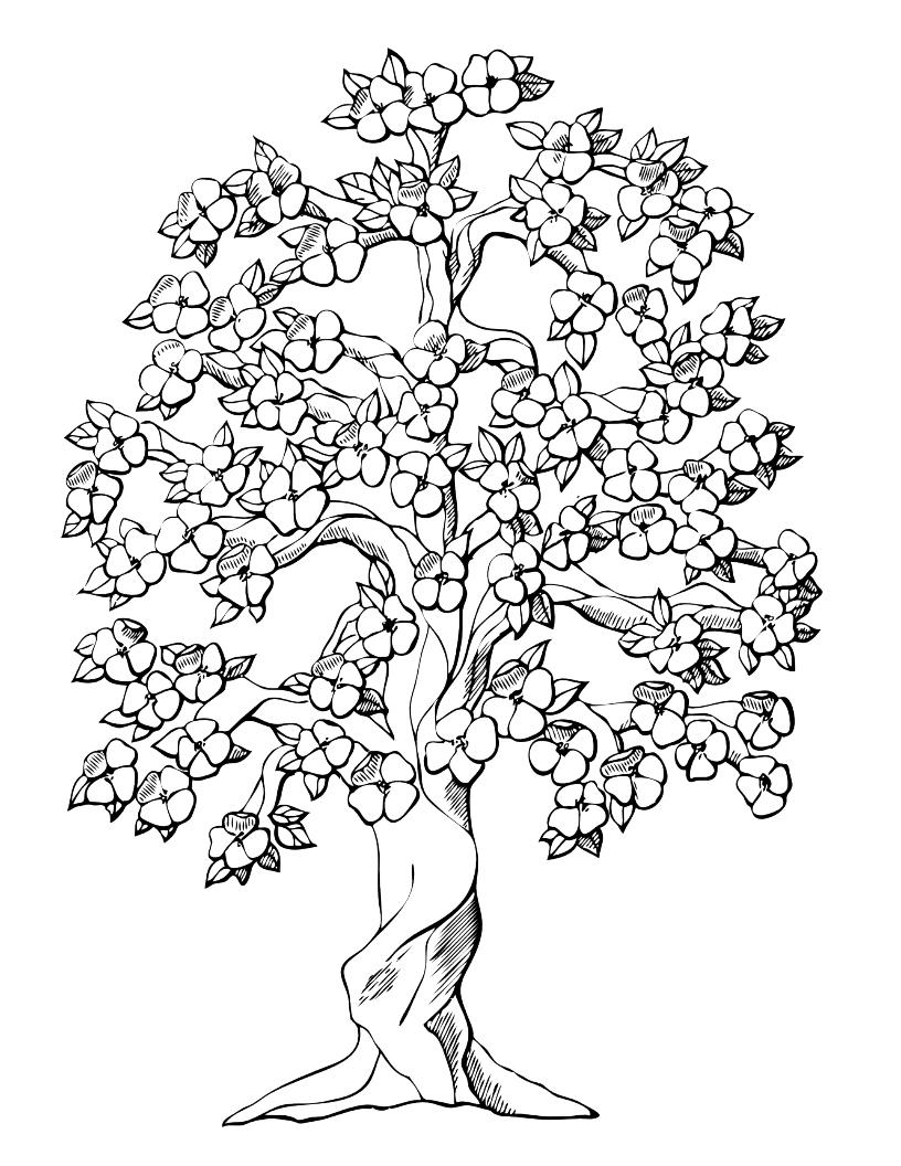Tranh tô màu cây mai nở rộ
