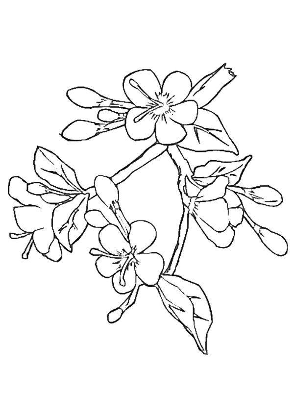 Tranh tô màu cho bé cành hoa mai