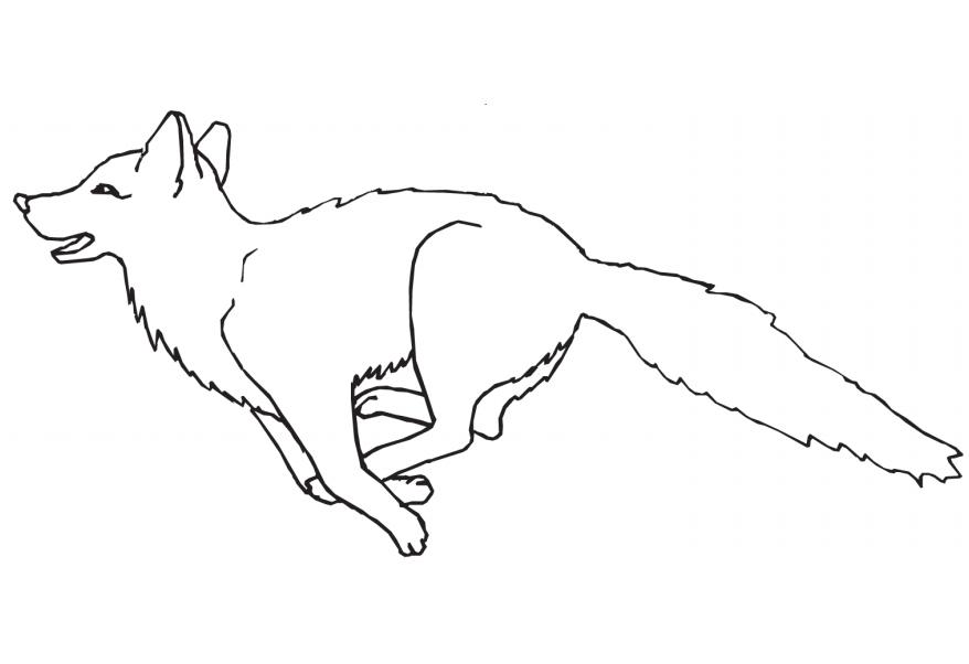 Tranh tô màu con cáo đang chạy