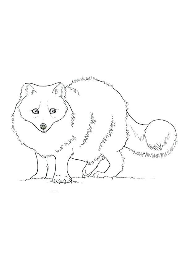 Tranh tô màu con cáo đáng yêu nhất