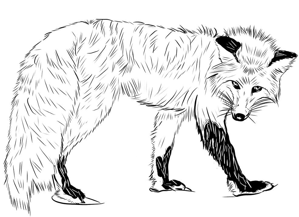 Tranh tô màu con cáo đẹp, ngầu