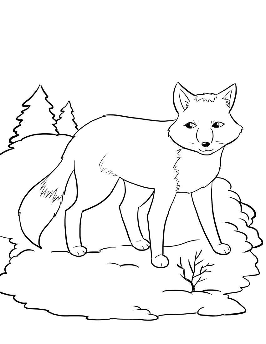 Tranh tô màu con cáo đẹp