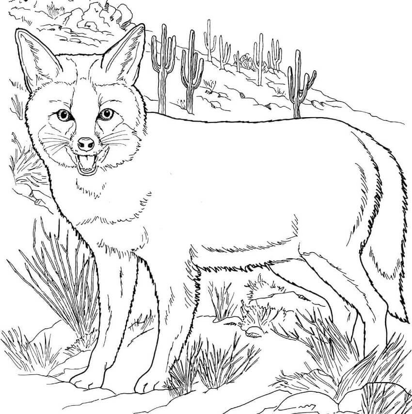 Tranh tô màu con cáo lang thang đồng cỏ
