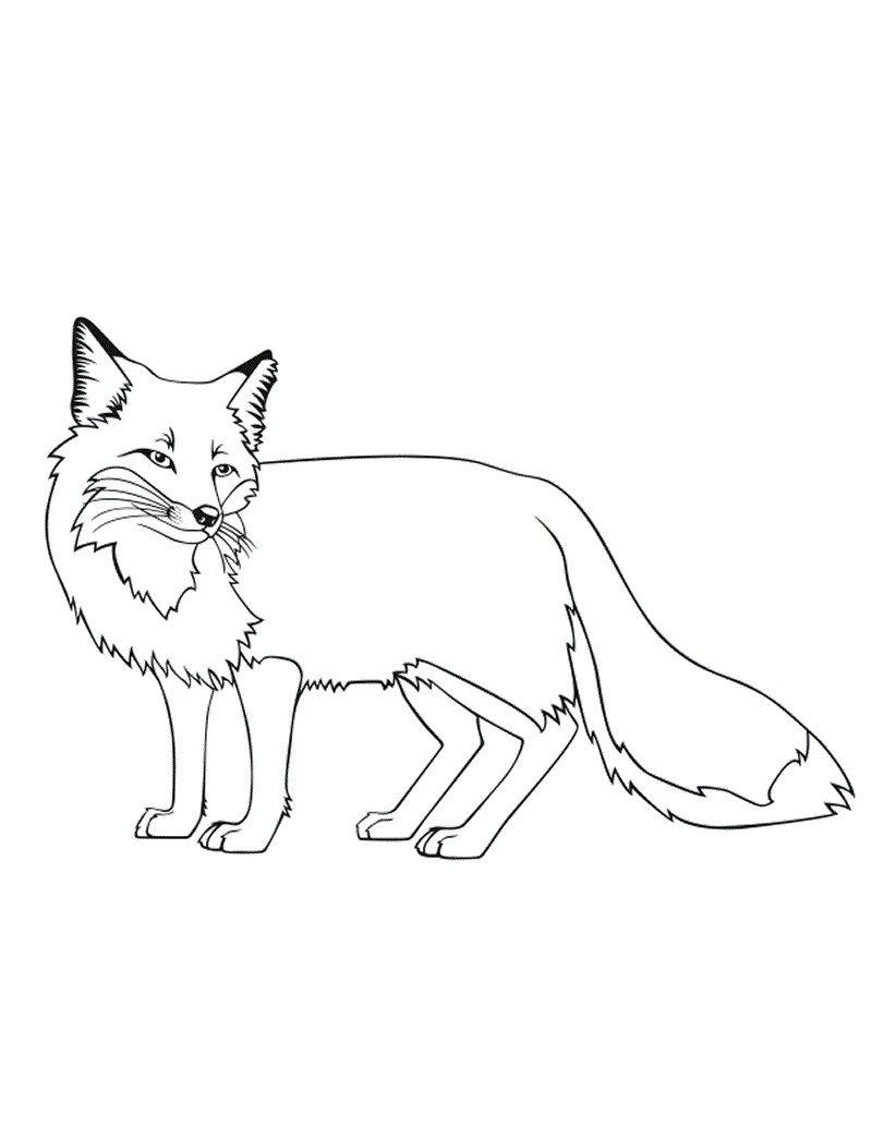 Tranh tô màu con cáo ngoảnh mặt phía sau