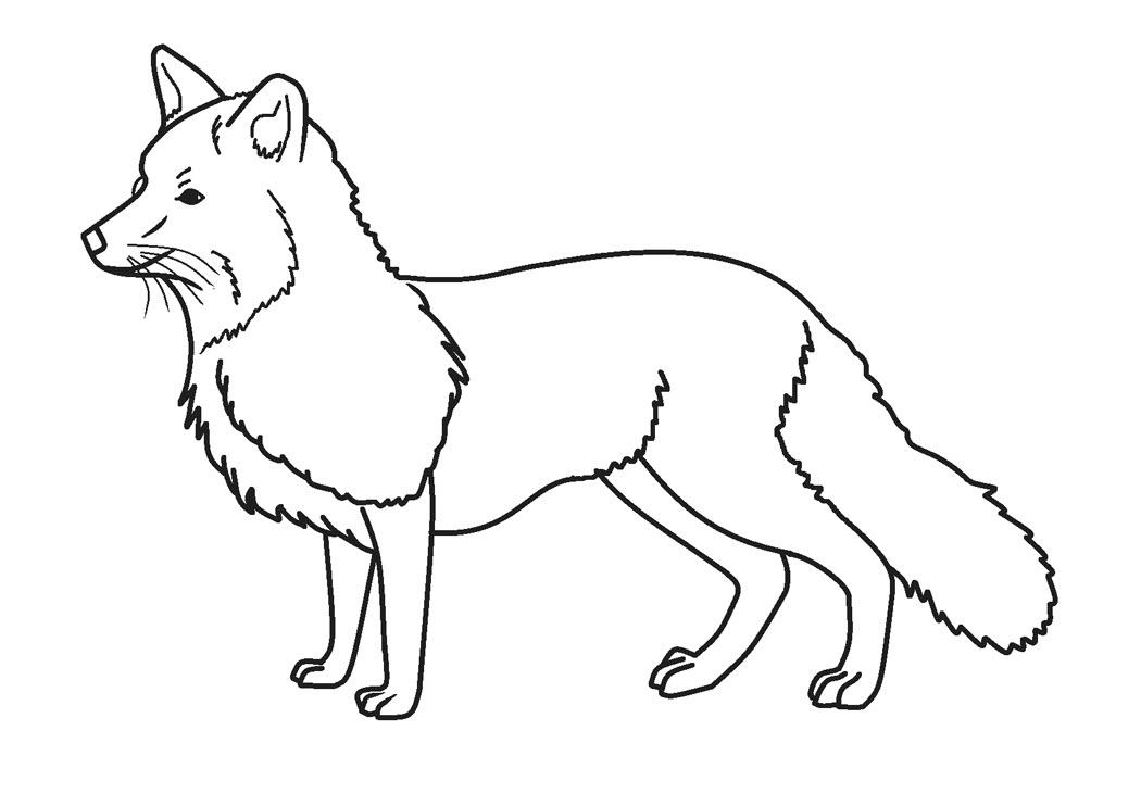 Tranh tô màu hình con cáo
