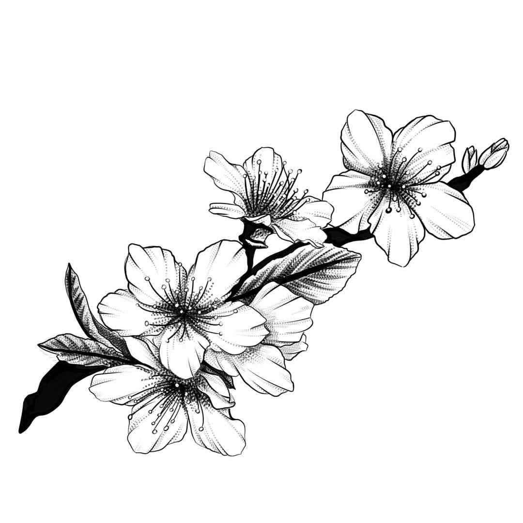 Tranh tô màu hoa đào đẹp, chân thực nhất
