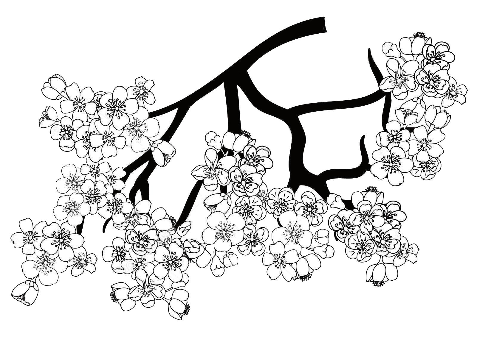 Tranh tô màu hoa đào đẹp, hấp dẫn nhất
