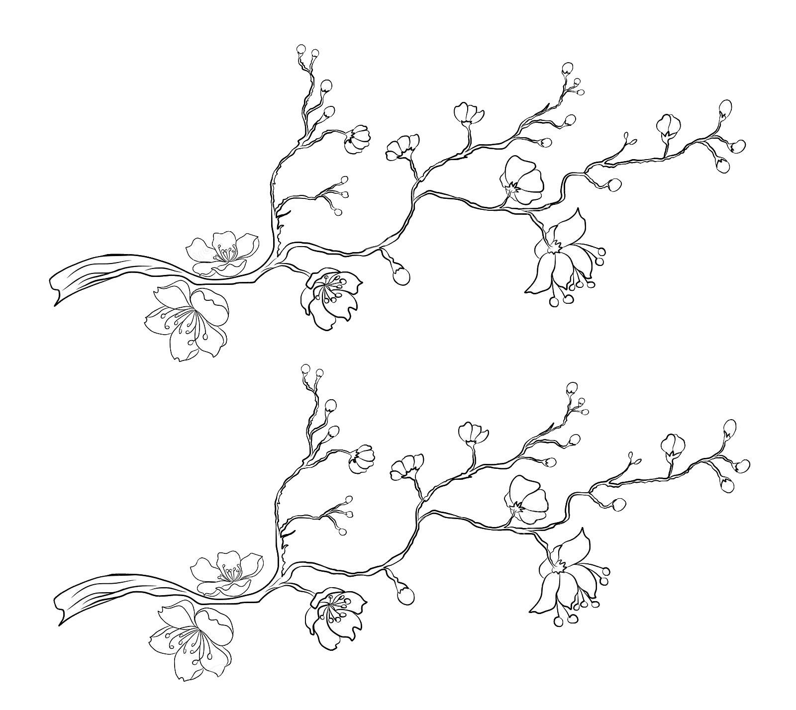 Tranh tô màu hoa đào tuyệt đẹp