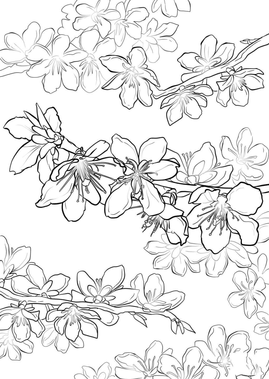 Tranh tô màu hoa mai cực đẹp