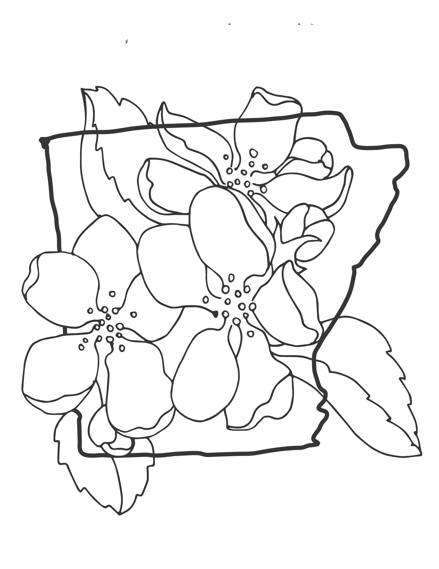 Tranh tô màu hoa mai đẹp, đơn giản