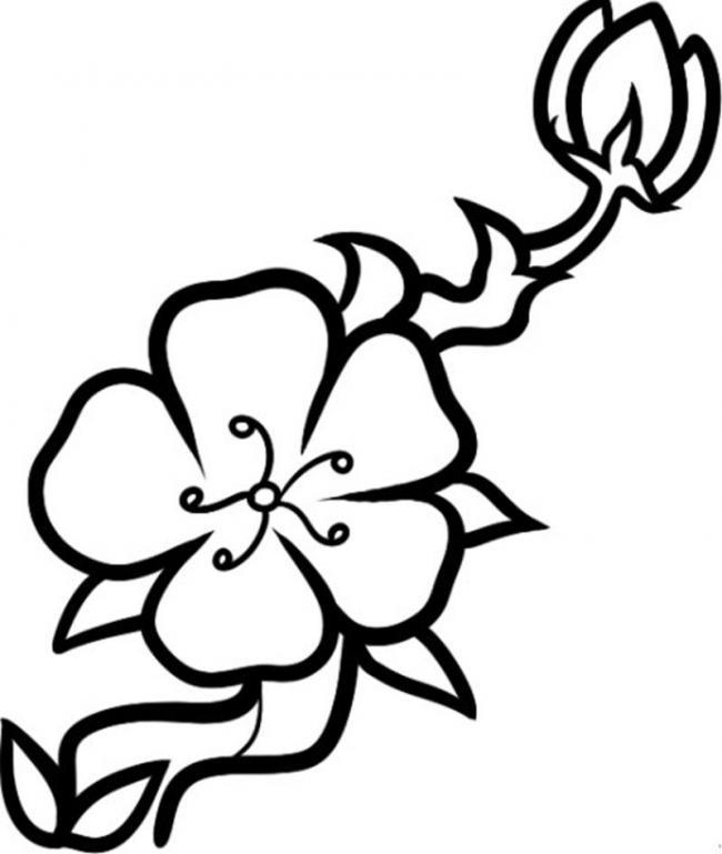 Tranh tô màu hoa mai đơn giản, dễ tô