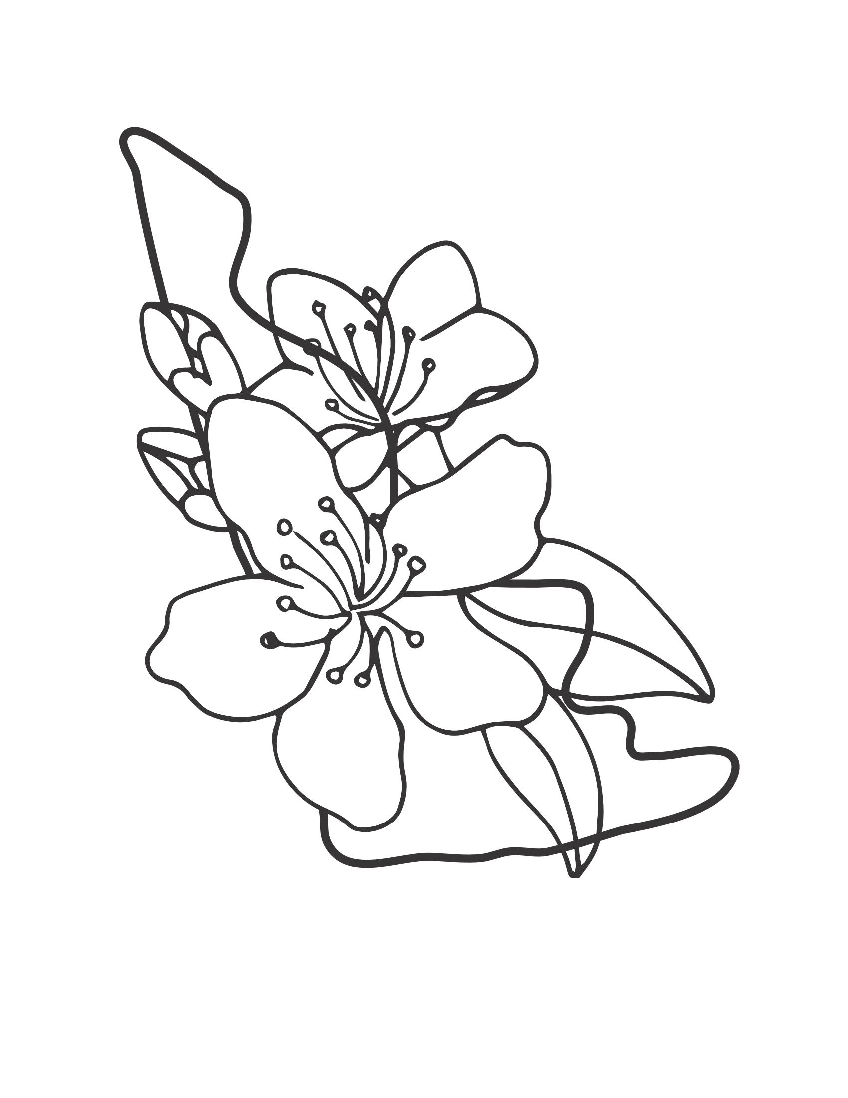 Tranh tô màu hoa mai đơn giản