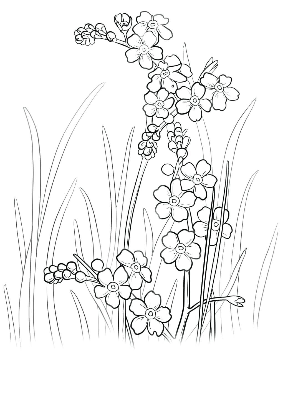 Tranh tô màu hoa mai, hoa đào đẹp