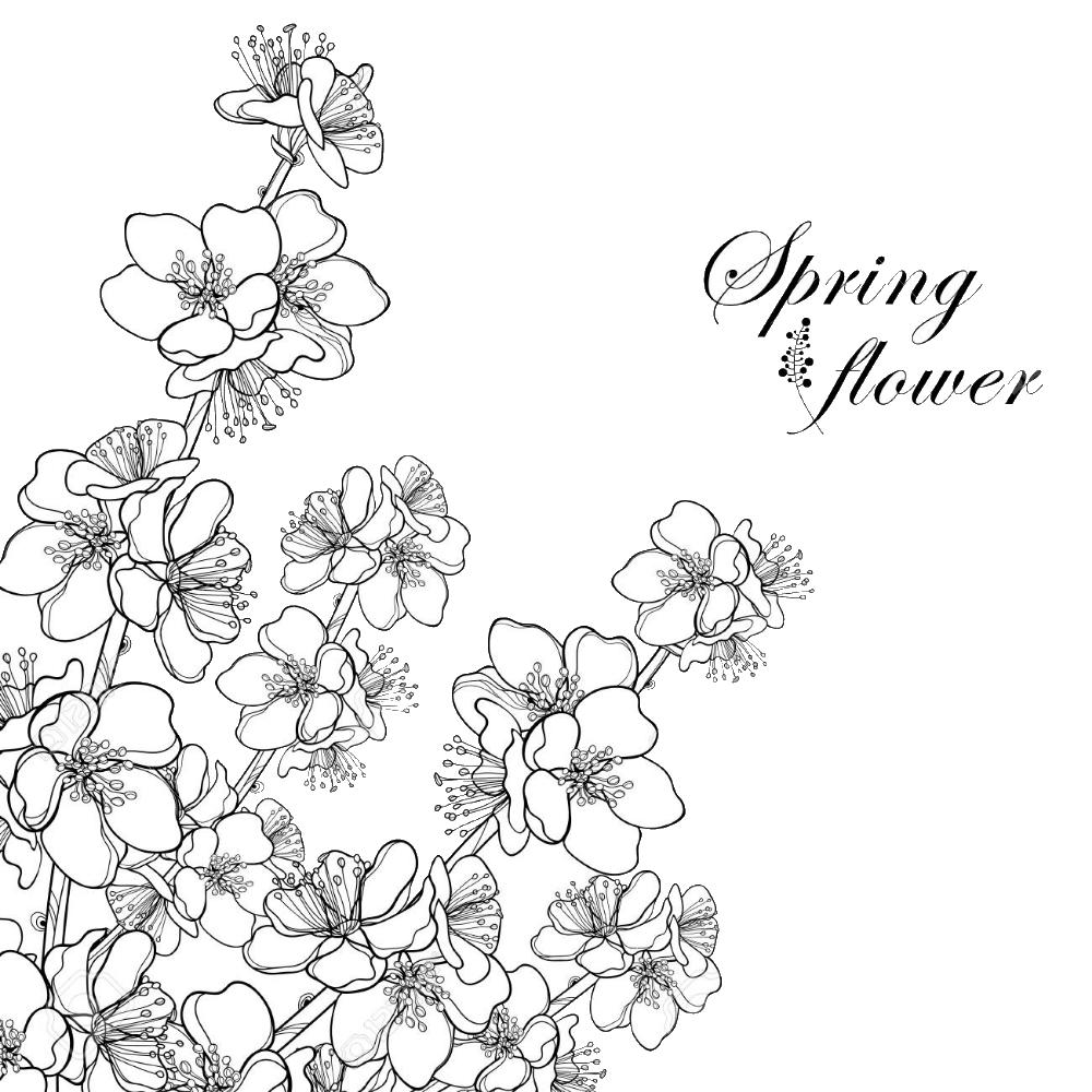 Tranh tô màu hoa mai mùa xuân
