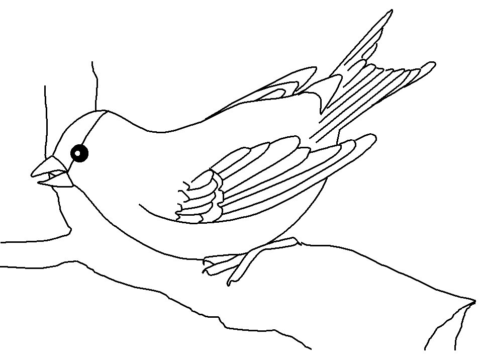 Hình con chim tô màu