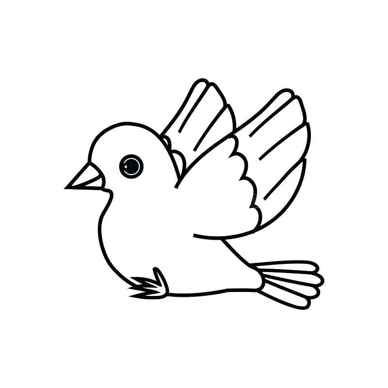 Hình tô màu con chim đơn giản