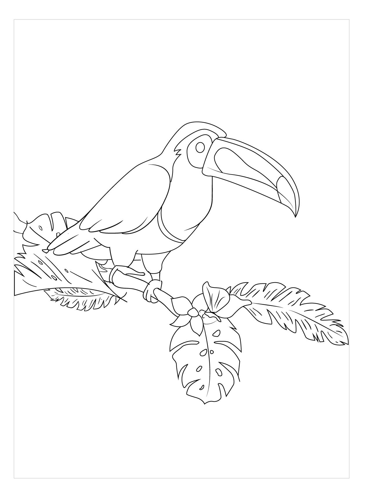 Mẫu tranh tô màu con chim đẹp nhất
