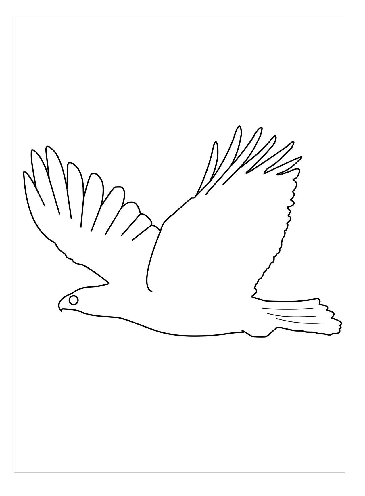 Mẫu tranh tô màu con chim đẹp