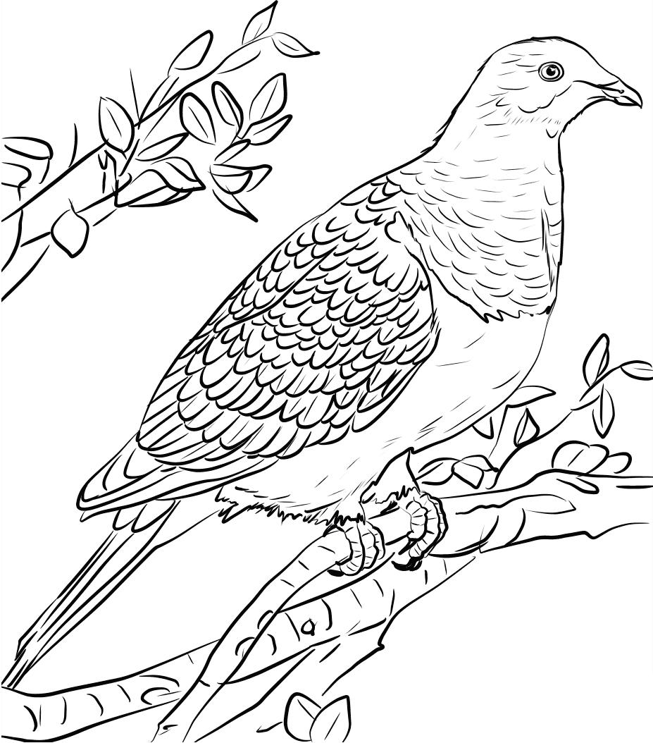 Tranh tô màu chim bồ câu