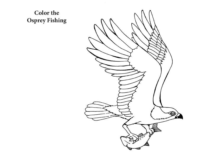 Tranh tô màu con chim bắt cá