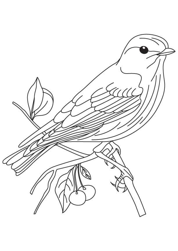 Tranh tô màu con chim chân thực đẹp nhất