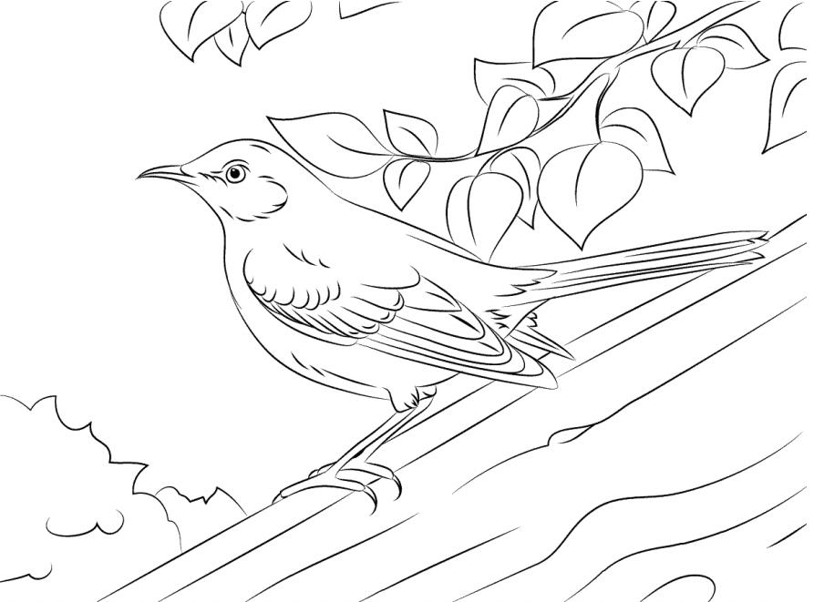 Tranh tô màu con chim đẹp, chân thực nhất